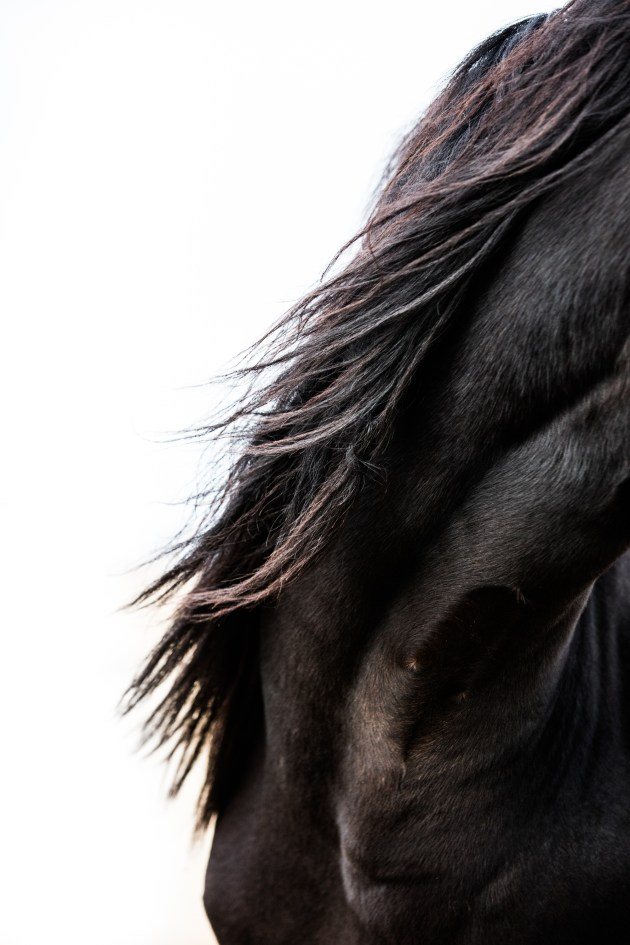 There is something incredibly beautiful about a horses mane. Zoom in on the finer details of your subject. Canon 5DSR, 70-200mm lens @ 125mm. 1/320s @ f4.5, ISO 1250.